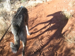 Bongo and his shadow over mud