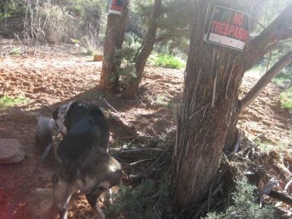 Bongo marking a bush below the No Trespassing sign