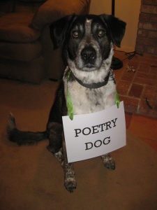 Bongo with a Poetry Dog sign