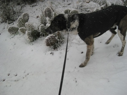 Bongo in the snow