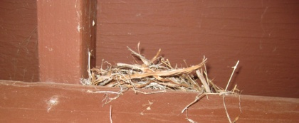 Bird nest on a rafter
