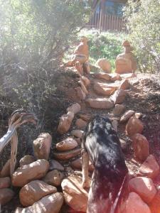 Bongo climbing stone steps