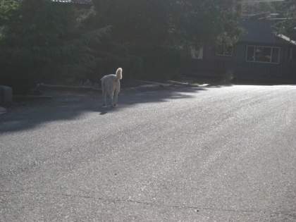 Ghost Dog disappearing down the street