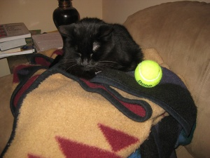 Scratchy with a tennis ball