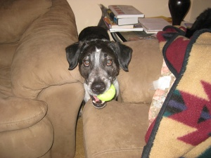 Bongo behind couches with a tennis ball