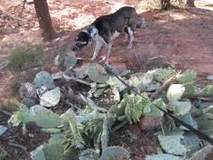 Bongo and some smashed up cactus