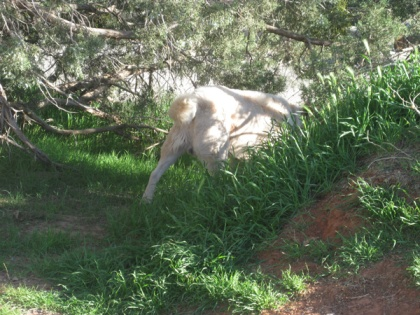 Ghost Dog disappearing through the bushes