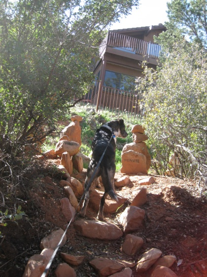 Bongo at the top of the steps