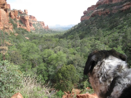 Bongo looking at Fay Canyon from above