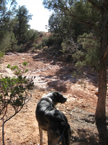 Bongo on an empty trail