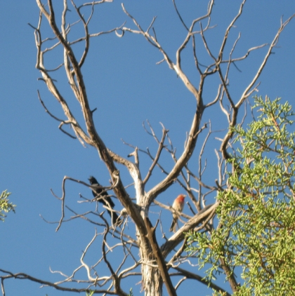 Birds on dead branches