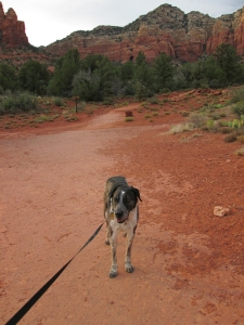 Bongo on the trail