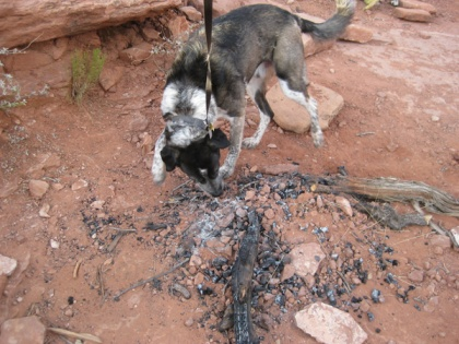 Bongo investigating the old fire