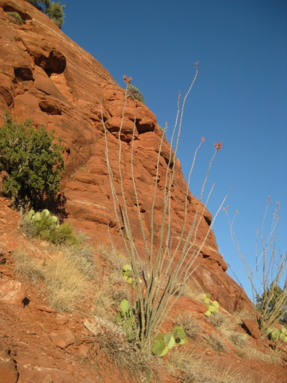 Ocotillo at the edge of Sugarloaf