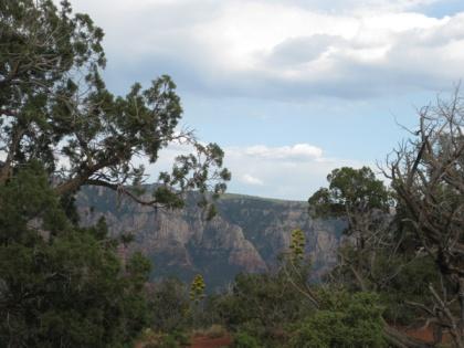 Century plants, trees, and Mogollon Rim