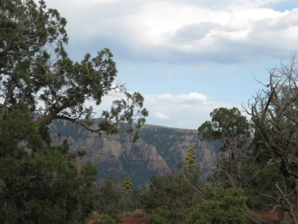 Century plants, trees, and Mogollon Rim