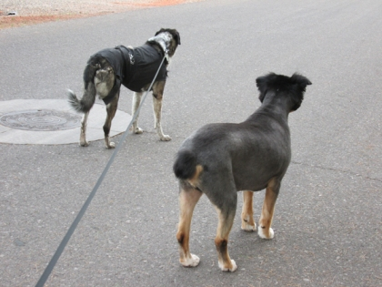 Bongo and Toby facing away