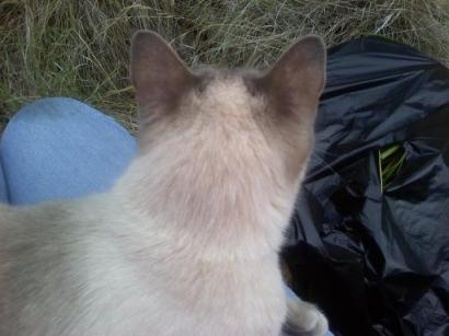 Cat on a lap