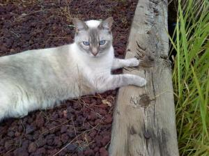cat lying in a yard