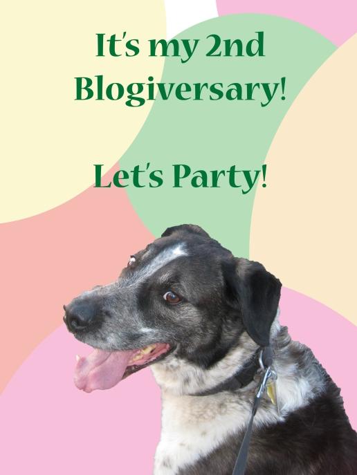 Bongo's 2nd Blogiversary