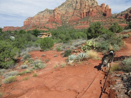 Bongo looking at a distant house and red rocks