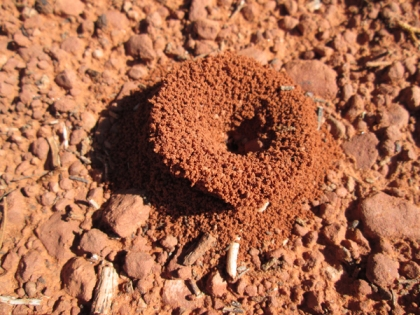 Funnel shaped ant hole entrance
