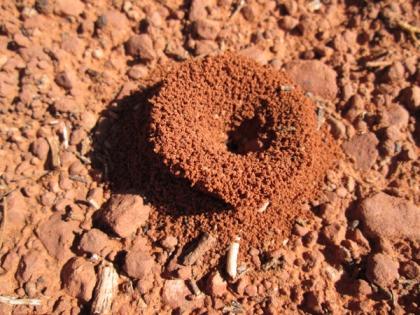 Funnel shaped ant hole entrance