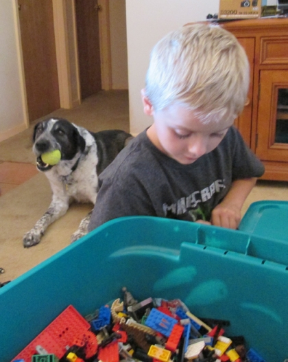 Boy playing with legos. Bongo in the background chewing his ball.