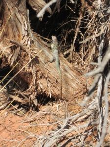 Lizard on a log