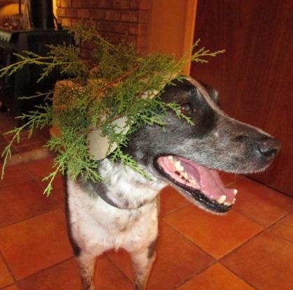 Bongo wearing his Nature Dog hat