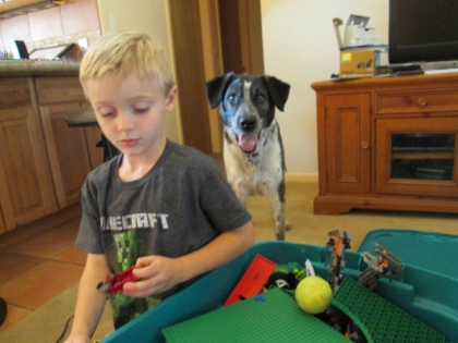 Tennis ball on legos that little buddy is playing with. Bongo waiting