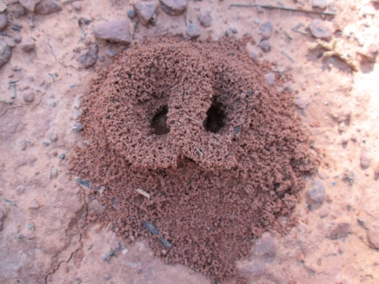 Overlapping ant hole entrances