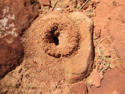 Ant hole entrance partly on a rock