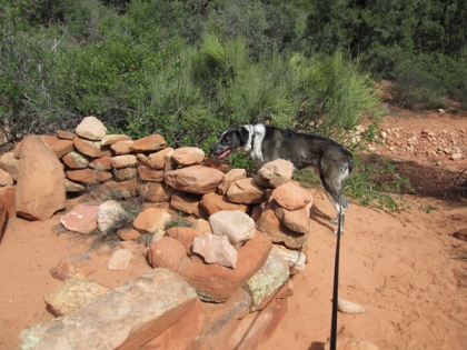 Bongo by a stone wall