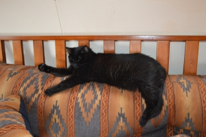 Scratchy on the back of a futon
