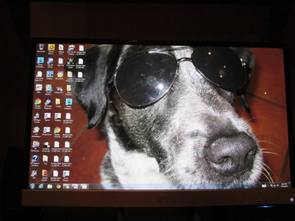 A picture of Bongo wearing sunglasses on a computer desktop