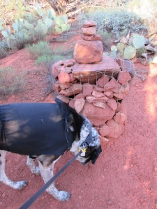 Bongo sniffing a cairn with extra rocks on top