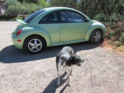 Bongo in front of a green Volkswagen bug