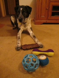 Bongo with his new toys