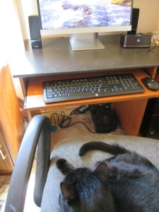 Scratchy watching the computer from the chair