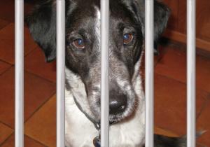 Bongo behind bars