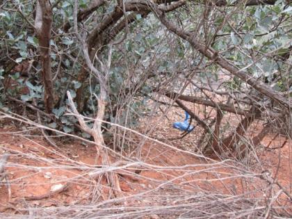Blue bag behind a bush