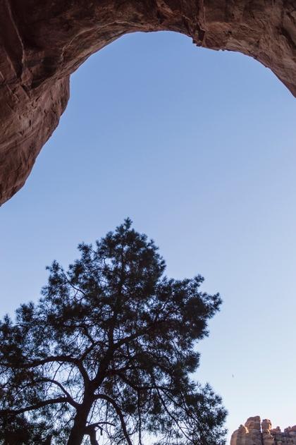 Tree near a cave entrance