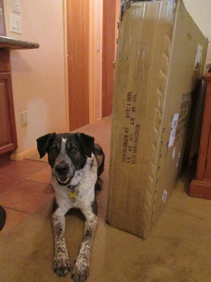 Bongo guarding his box