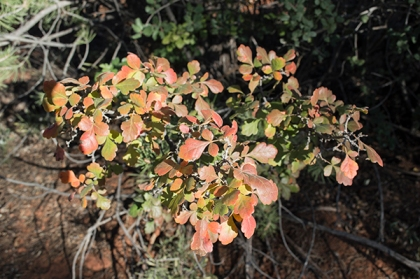 Small bush with fall colors