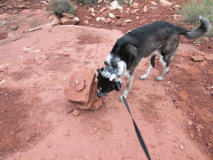Bongo sniffing another pile of rocks
