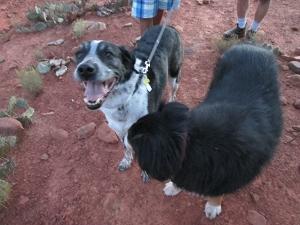 Bongo and Toby