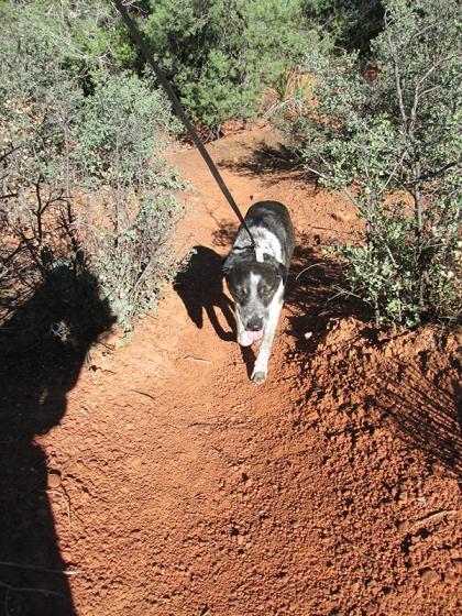 Bongo plodding along uphill