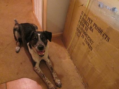 Bongo by a large box