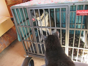 Scratchy looking at Bongo in his kennel